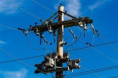鸟栖息在和在一个电线杆附近 免版税库存图片