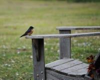 鸟椅子开会 库存照片