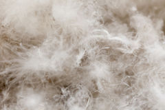 鸟概念羽毛被安置的白作家 库存照片