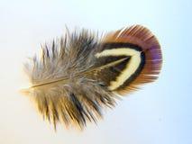 鸟概念羽毛被安置的白作家 库存图片