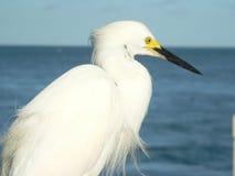 鸟水白色 库存照片
