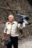 鸟法国掠食性显示培训 免版税库存照片