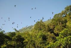 鸟流程在森林里 免版税库存图片