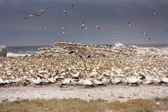 鸟海岸海运 免版税库存图片