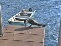 鸟海洋海运 免版税库存图片