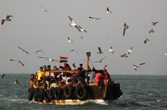 鸟海运 免版税图库摄影