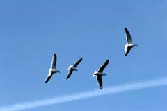 鸟海鸥 免版税库存图片