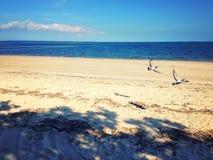 鸟海滩 免版税图库摄影