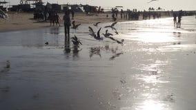 鸟海滩 免版税库存照片
