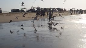 鸟海滩 库存照片