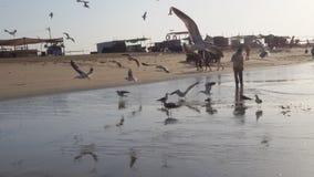 鸟海滩 库存图片