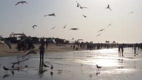鸟海滩 图库摄影