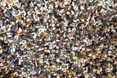 鸟混杂的种子 图库摄影
