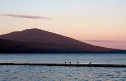 鸟湖粉红色微明 库存照片
