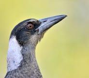 鸟滑稽的纵向 免版税图库摄影
