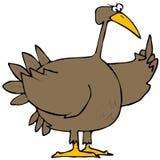 鸟火鸡 库存图片