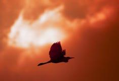 鸟火 免版税图库摄影