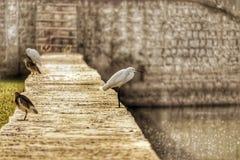 鸟点击, Ulsoor湖 库存照片