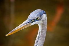 鸟热带佛罗里达的公园 免版税库存照片