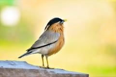 鸟照片 免版税库存照片