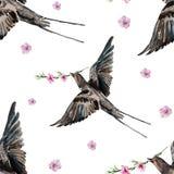 鸟燕子,开花的桃子,水彩 免版税库存照片