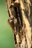 鸟爬行物结构树 免版税图库摄影