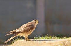 鸟猎人 库存图片