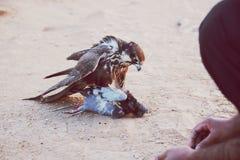 鸟猎人 库存照片