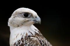 鸟猎鹰纵向 免版税库存照片