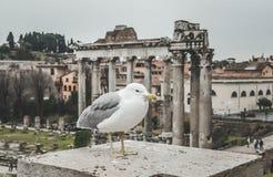 鸟生活在罗马 anciant tample谷 库存图片