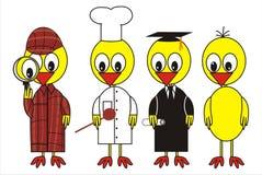 鸟用不同的cloters 免版税库存照片