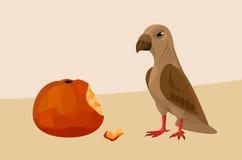 鸟用苹果 库存照片