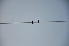 鸟电汇 图库摄影