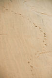 鸟痕迹在沙子的 免版税图库摄影