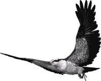 鸟白鹭的羽毛 皇族释放例证