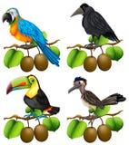鸟的不同的类型在猕猴桃分支的 皇族释放例证