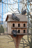 鸟的公寓房 免版税库存照片