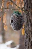 鸟的冬天家 免版税库存照片