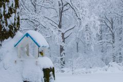 鸟的冬天饲料 在冬天饲养者的北美山雀五子雀 免版税库存图片