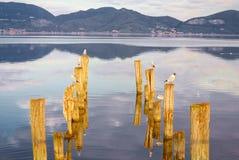 鸟的反射在湖,托斯卡纳平衡了 图库摄影