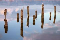鸟的反射在湖,托斯卡纳平衡了 免版税图库摄影