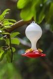 鸟的喷泉在一个分支在庭院里 免版税库存照片