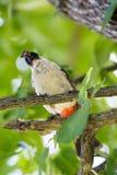 鸟的图象在一个分支的在自然背景 库存照片