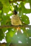 鸟的图象在一个分支的在自然背景 免版税库存照片