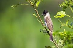 鸟的图象在一个分支的在自然背景 库存图片