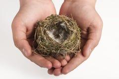 鸟的巢在孩子的手上 免版税库存照片