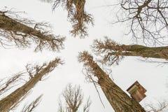 鸟的房子为冬天 免版税库存图片