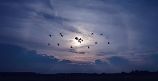 鸟的春天或秋天迁移 免版税库存照片