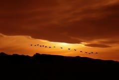 鸟的春天或秋天迁移 库存图片