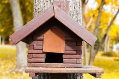 鸟的木饲养者 绿色背景 库存照片